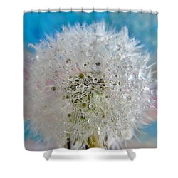 Dandelion Puff Shower Curtains Page Of Fine Art America