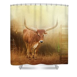 Watusi In The Dust And Golden Light Shower Curtain