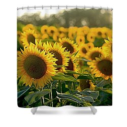 Waving Sunflowers In A Field Shower Curtain