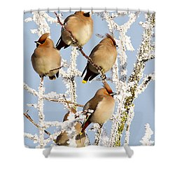 Waxwings And Hoar Frost Shower Curtain