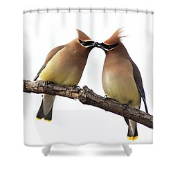 Waxwings In Love Shower Curtain by Mircea Costina Photography