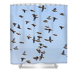 Shower Curtain featuring the photograph Waxwings by Mircea Costina Photography