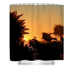 Shower Curtain featuring the photograph We Are Sunflowers by Chris Berry