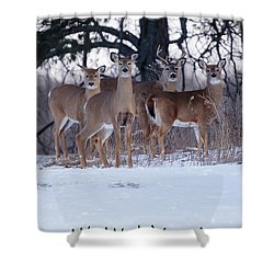 We Wish You A Merry Christmas Shower Curtain by Gary Hall