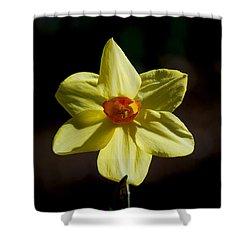 #wearealleternalstars Shower Curtain