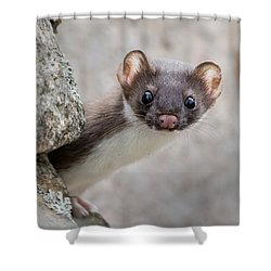 Shower Curtain featuring the photograph Weasel Peek-a-boo by Stephen Flint