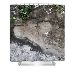 Weathered Broken Concrete Wall With Vines Shower Curtain