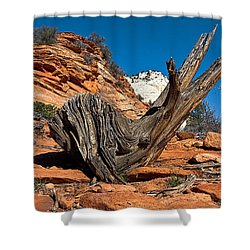 Weathered Check Shower Curtain by Christopher Holmes