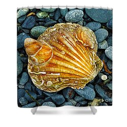 Weathered Scallop Shell Shower Curtain
