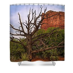 Weathered Tree At Courthouse Butte Shower Curtain