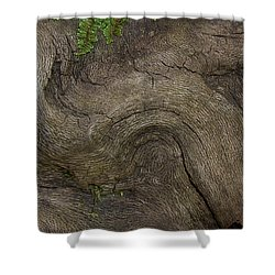 Shower Curtain featuring the photograph Weathered Tree Root by Mike Eingle