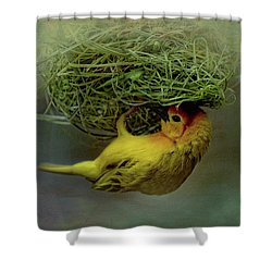Weaver Bird Building A Nest Shower Curtain