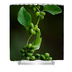 Weaving Vines Shower Curtain by Shelby  Young