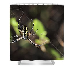 Web Builder Shower Curtain