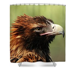 Wedge-tailed Eagle Shower Curtain