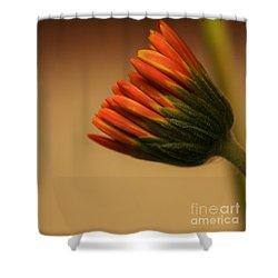 Wee Gerber Daisy In Bloom - Georgia Shower Curtain