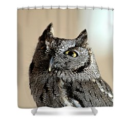 Wee Western Screech Owl Shower Curtain