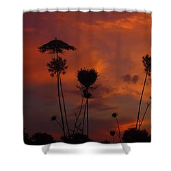 Weeds In The Sunrise Shower Curtain by Kathryn Meyer
