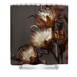 Weeds Of Winter Shower Curtain