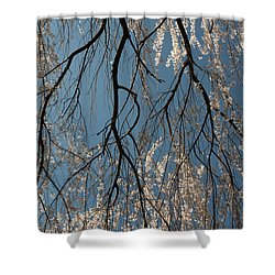 Weeping Cherry #2 Shower Curtain
