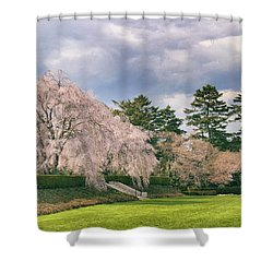 Shower Curtain featuring the photograph Weeping Cherry In Bloom by Jessica Jenney