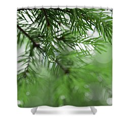 Weeping Pine 2 Shower Curtain