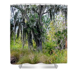 Shower Curtain featuring the photograph Weeping Willow by Madeline Ellis
