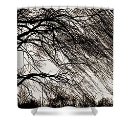 Weeping Willow Tree  Shower Curtain by Carol F Austin