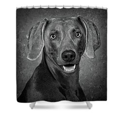 Weimaraner In Black And White Shower Curtain by Greg Mimbs