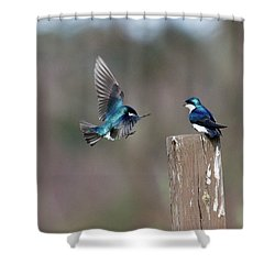 Shower Curtain featuring the photograph Welcome Back by Gary Wightman