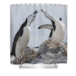 Welcome Back Shower Curtain