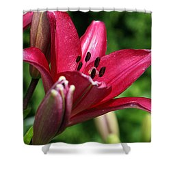 Welcoming Shower Curtain by Amanda Barcon