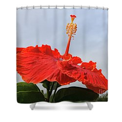 Well Disguised Ladybug Shower Curtain by Mary Haber