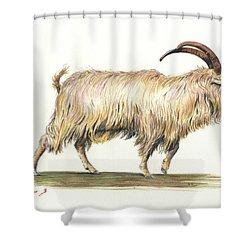 Welsh Long Hair Mountain Goat Shower Curtain