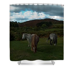 Shower Curtain featuring the photograph Welsh Mountain Pony's  by Lynn Hughes
