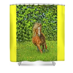 Welsh Pony Shower Curtain