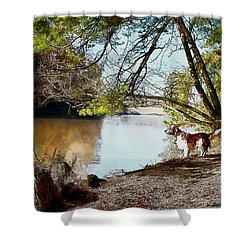 Welsh Springer Spaniel By The River Shower Curtain
