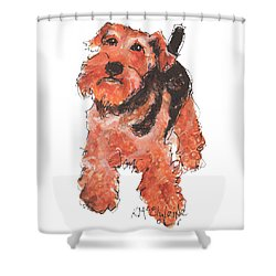 Welsh Terrier Or Schnauzer Watercolor Painting By Kmcelwaine Shower Curtain
