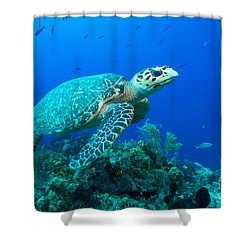 West Caicos Traveler Shower Curtain