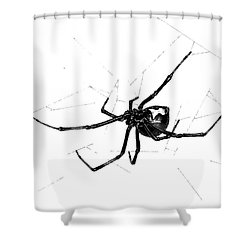 Western Black Widow Shower Curtain