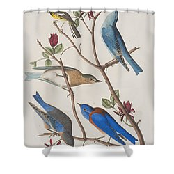 Western Blue-bird Shower Curtain