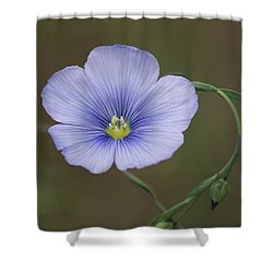 Shower Curtain featuring the photograph Western Blue Flax by Ben Upham III