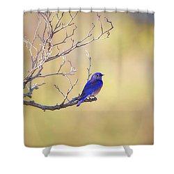 Western Bluebird On Bare Branch Shower Curtain