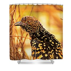 Western Bowerbird Shower Curtain by Racheal  Christian