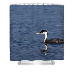 Western Grebe In Late Afternoon Light Shower Curtain