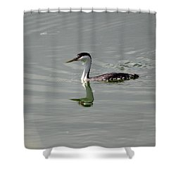 Western Grebe Shower Curtain
