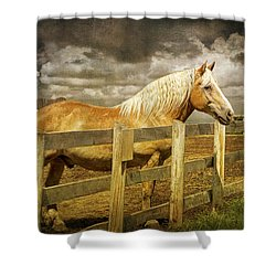 Western Horse In Alberta Canada Shower Curtain by Randall Nyhof