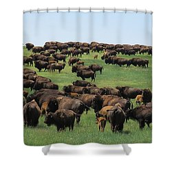 Western Kansas Buffalo Herd Shower Curtain