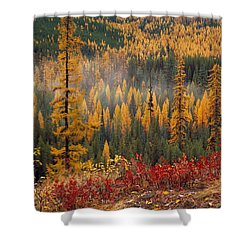 Western Larch Forest Autumn Shower Curtain