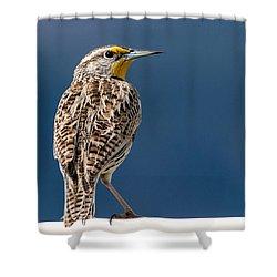 Western Meadowlark Shower Curtain by Dawn Key